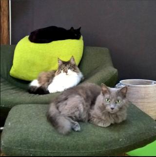 Threecatsgreenchair