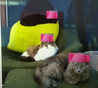 Pussyhatson cats